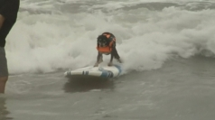 Pet owners enter their dogs into US surfing competition
