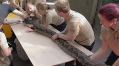 Giant python has ultrasound heart scan