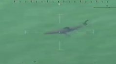 Great white shark forces Massachusetts beach evacuation