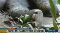 Endangered Sumatran elephants found dead in Indonesia