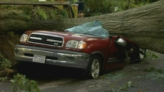 A car is crushed by a tree in Virginia.