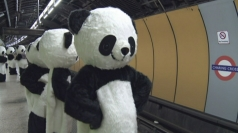 The 'pandas' hit the Underground on July 4.