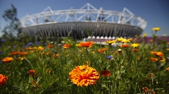 Flowers bloom at London's Olympic Park.