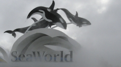 Killer whale drags trainer underwater at SeaWorld, San Diego