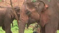 Elephant retirement home opens in Burma
