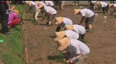 Rice farmers smash world record