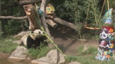 Fu Hu the panda celebrates his second birthday in style.