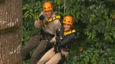 Will and Kate harness up and take to the trees in Borneo