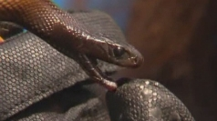 Teenager survives world's most venomous snake bite