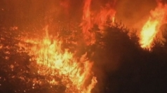 Huge forest fires hit Turkey-Syria border