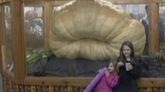 World's biggest pumpkin weighed in at Massachusetts fair.