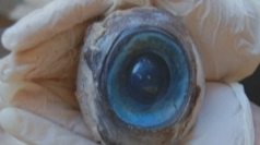 Mysterious giant eye washes up on Florida beach.