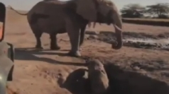Baby elephant rescued from Kenyan well