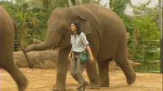 Elephant crushes keeper at Sydney zoo