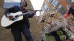 Bob the London busker cat heads to Hollywood