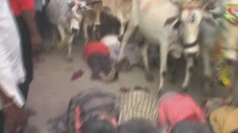 Men trampled by cows during ritual