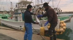 The Fukushima fishermen and their radioactive fish