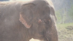 Circus owner convicted of abusing Anne the elephant