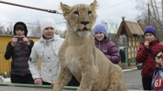 Escaped Lion Cub: School children take wild animal to class