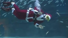 Santa swims with sardines in South Korea