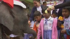 Elephants replace reindeer for Santa Claus at Thai school