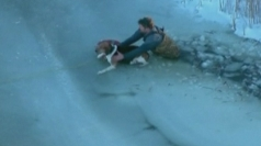 Dog stuck on ice saved by rescuers in Michigan