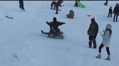 Snow fail! Kids on sledge knock woman off feet