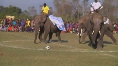 Elephants play football in Nepal