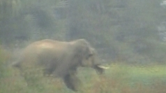 Elephant goes on rampage in Indian village