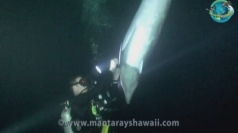 Amazing underwater footage of dolphin rescue