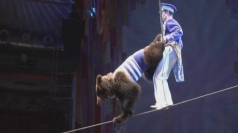 Tightrope-walking bears at Russian circus