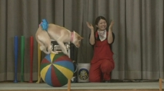 Dog circus educates children in Japan