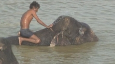 Elephants in India face water shortage