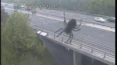 Giant spider terrorises M3 in Hampshire