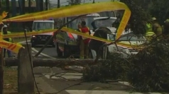 Australian storms: Couple trapped after tree falls on car