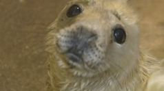 Seal pups orphaned in storm surge overrun rescue centre