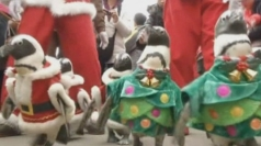 Penguins in Christmas jumpers at South Korean zoo
