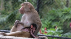 Baby baboon born at Miami's Jungle Island